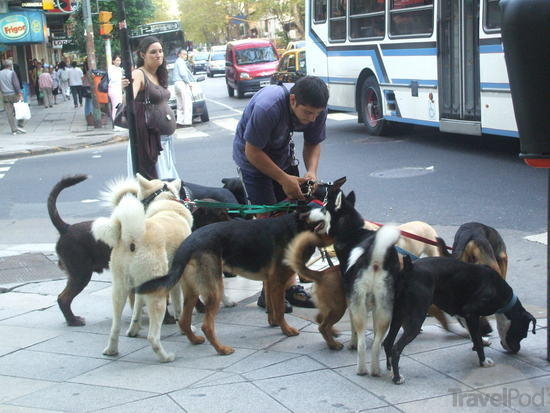 pro-dog-walker-carilo